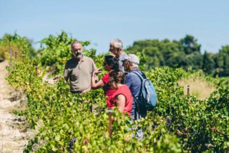 Expériences dans les vignes des Côtes du Rhône © O'Brien Thomas